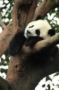 rp_google-panda-3.92-199x300.jpg